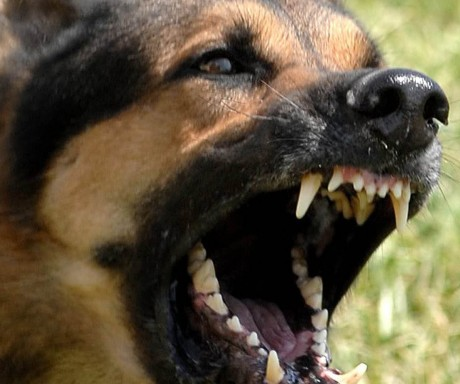 WOOF WOOF...Barking dogs and pub music top the list of complaints