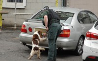 A PSNI dog handler checks the area during the security alert on Monday