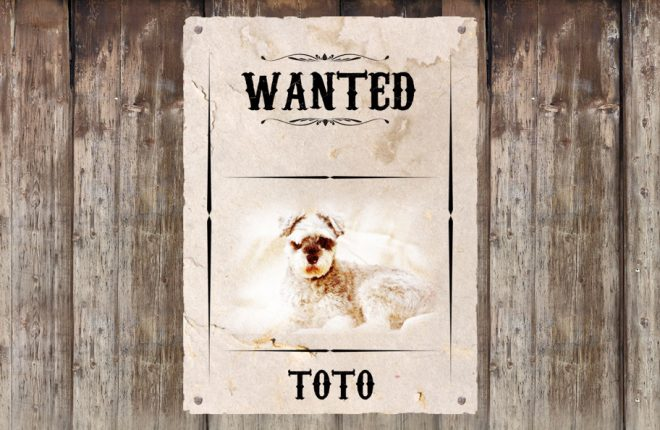 Enniskillen Ligh Operatic are seeking their Toto for this year's Chirstmas production.